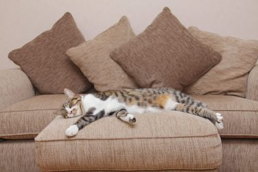 belfast upholstery cleaning